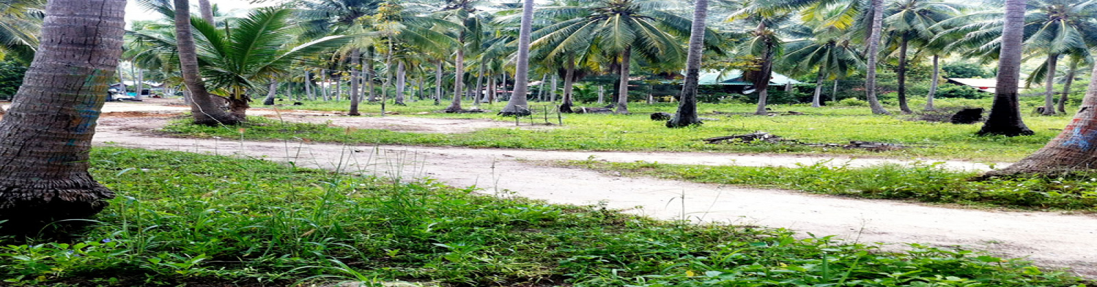 Land,For Sale,1007
